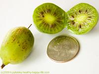 kiwiberry size