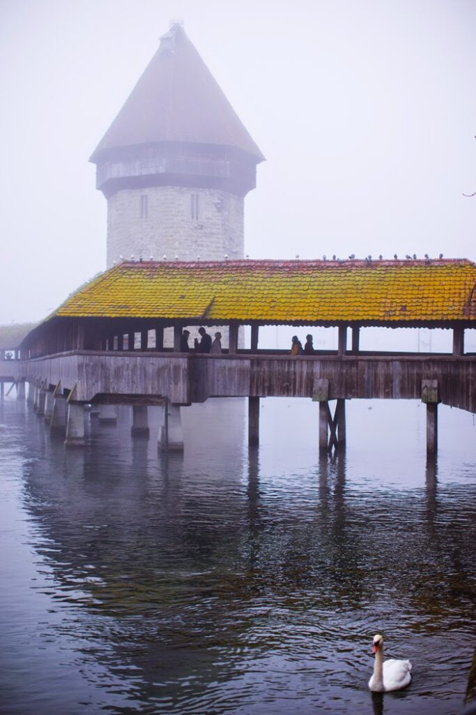 the chapel bridge and a swan