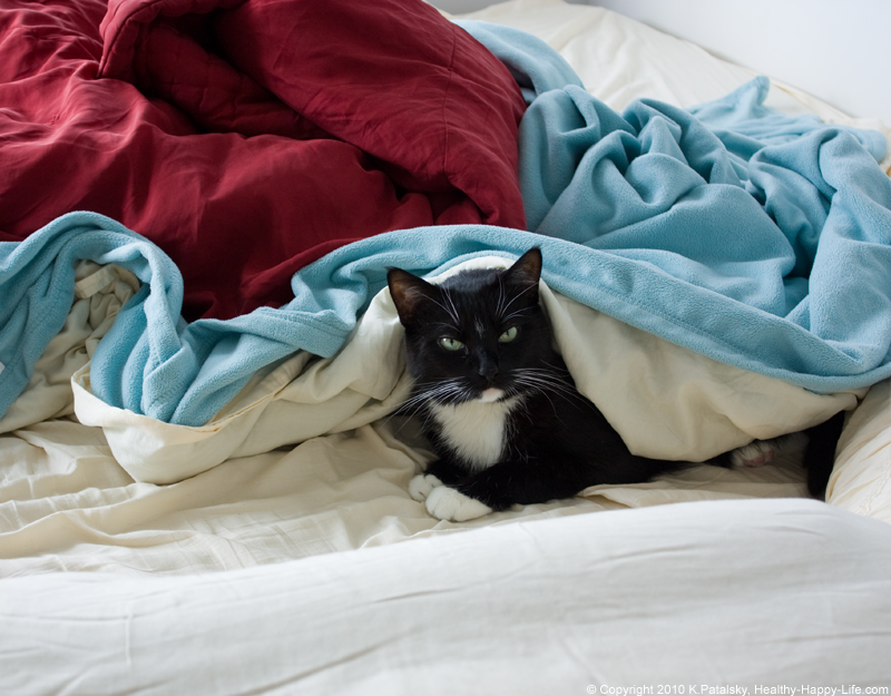 nelly in bed cat