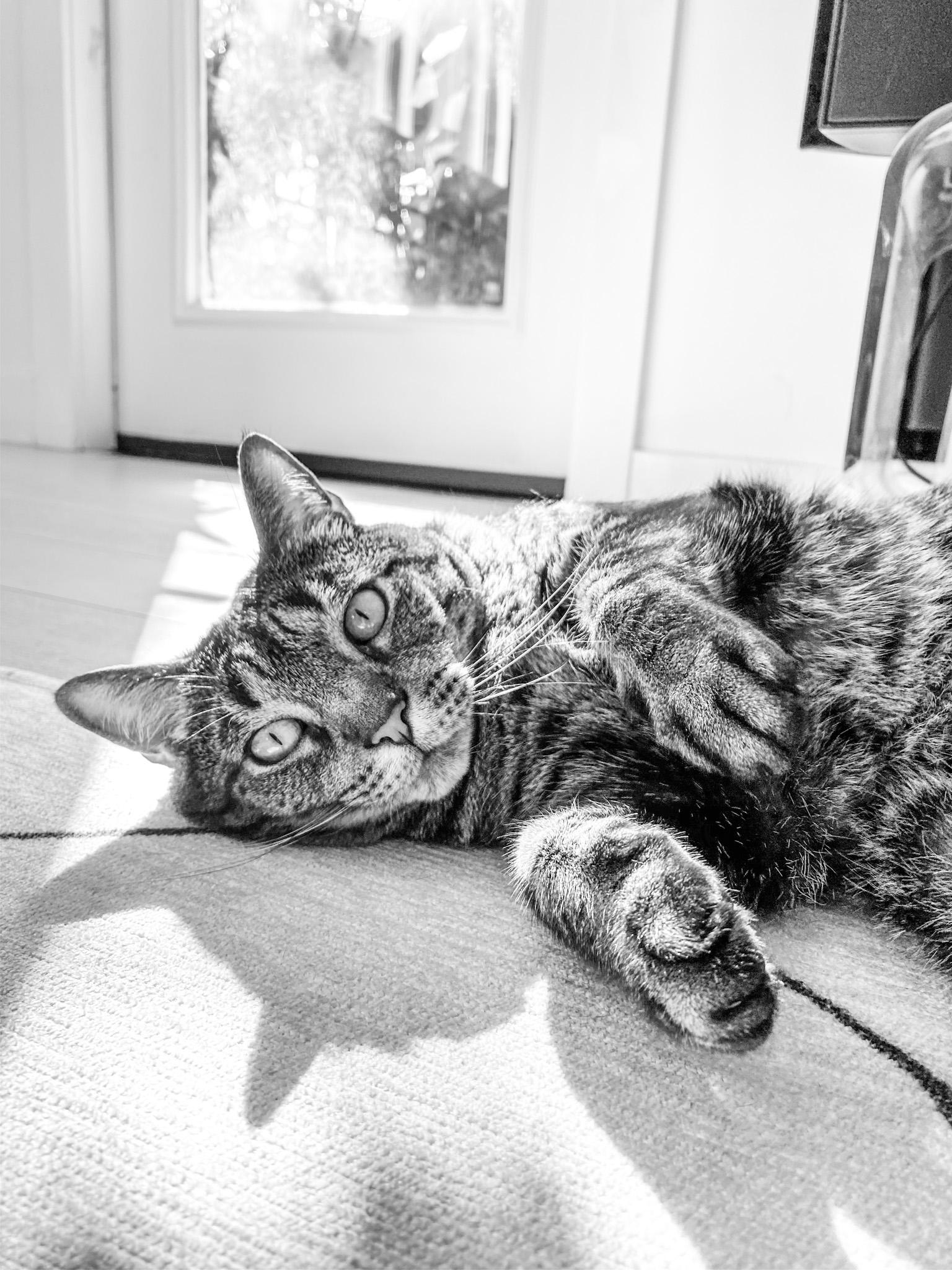 sochi cat morning rolls