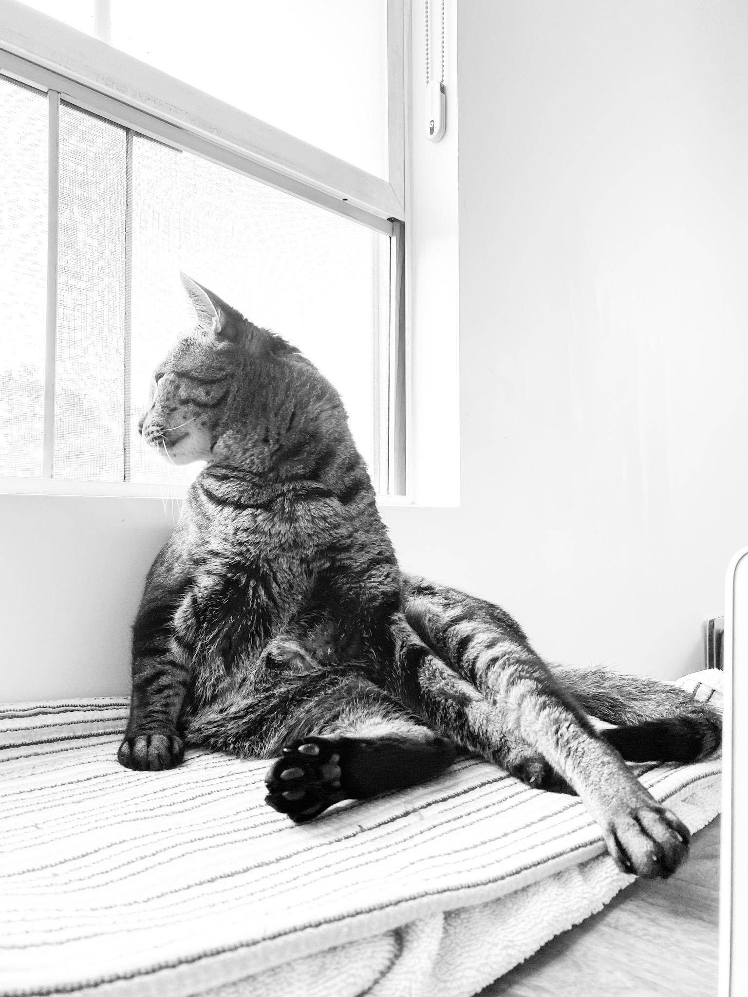 sochi the cat lounging