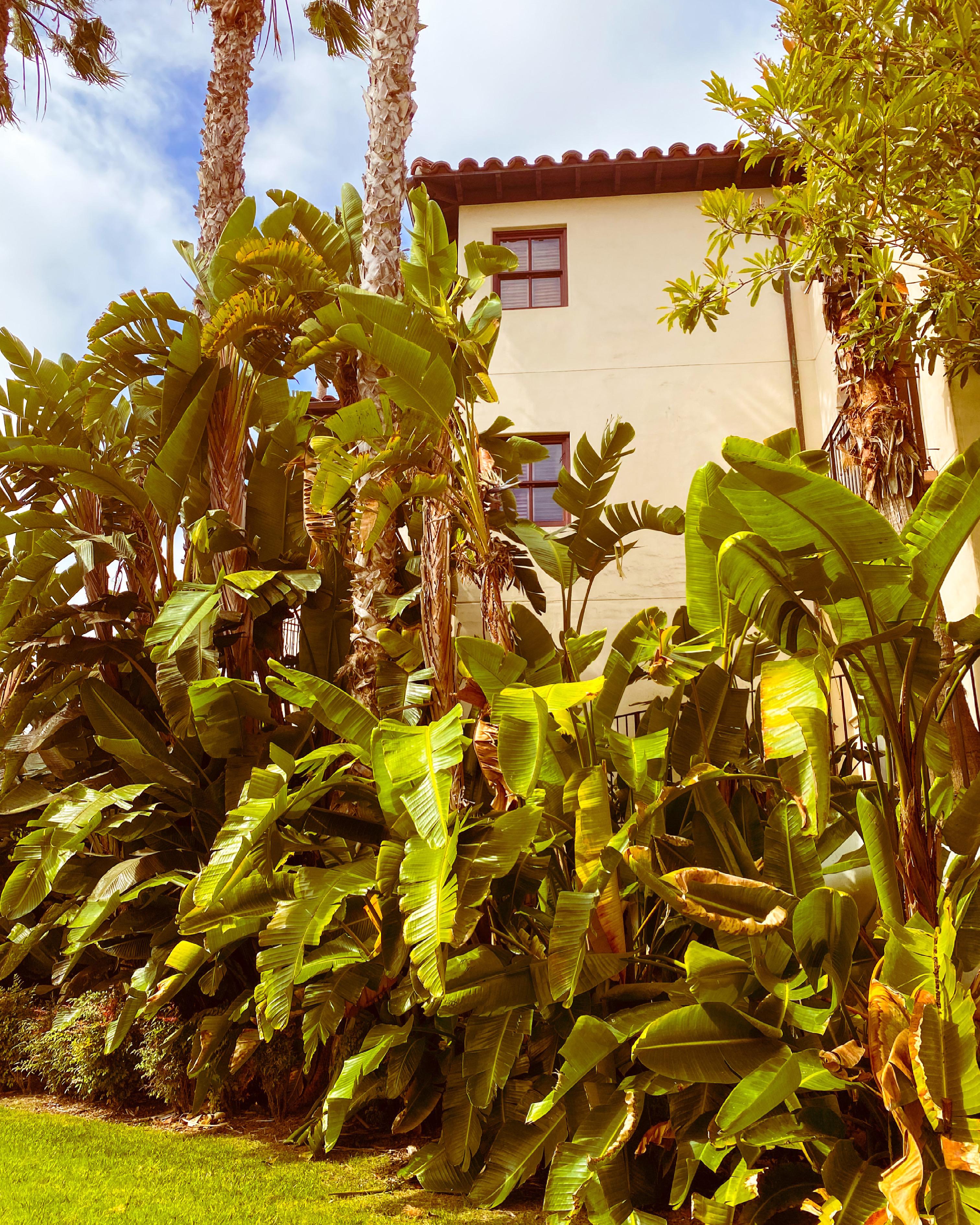 ritz baccarat Santa Barbara palms
